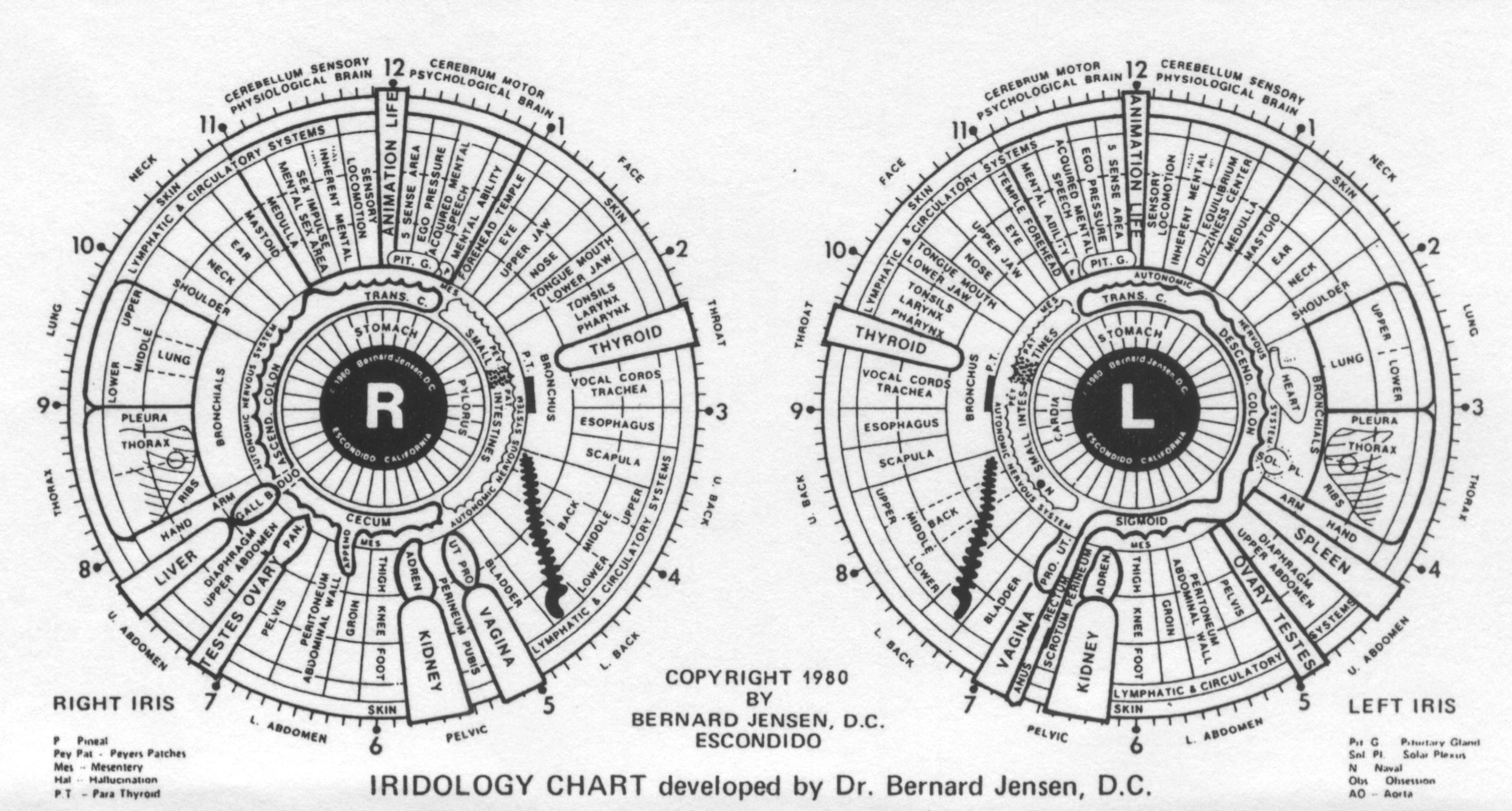 [Image: iridology-eyechart-big.jpg]